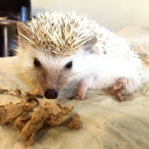 Pringles the Hedgehog instagood picoftheday instapic instadaily